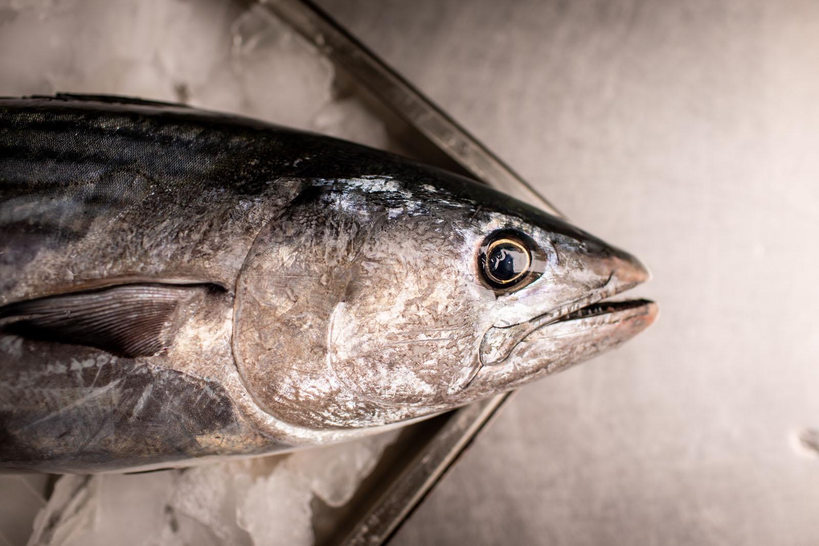 Pesce azzurro: come sceglierlo e come cucinarlo